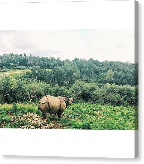 Rhinos Canvas Print - Day Trip To Africa Nbd #rhino #land by Bailey Moore
