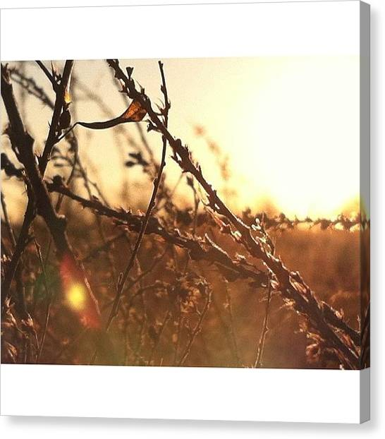 Autumn Leaves Canvas Print - #day58 Of #365 & A #somber #copper by Smashing Jean