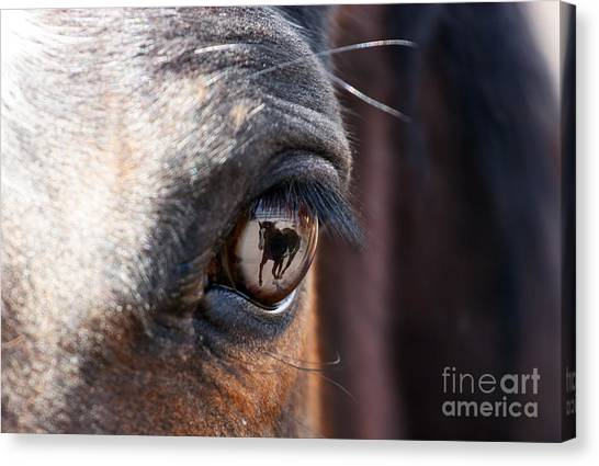 Daydream Of A Horse Canvas Print