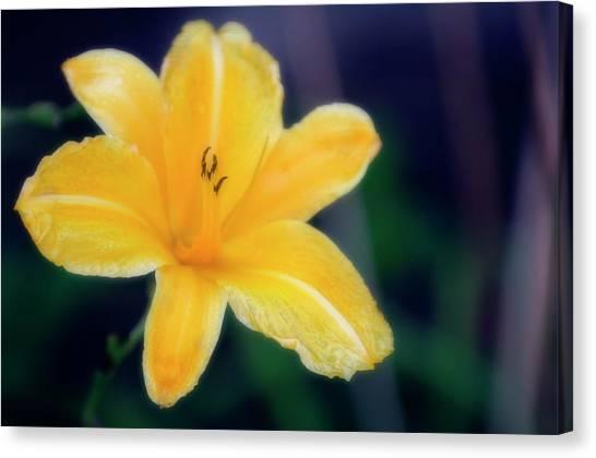 Daylily Canvas Print - Daylily (hemerocallis Hybrid) by Maria Mosolova/science Photo Library