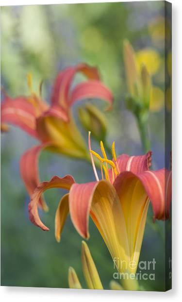 Daylily Canvas Print - Daylily Hemerocallis Pink Prelude by Tim Gainey
