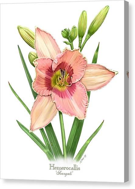 Daylily Svengali  Canvas Print