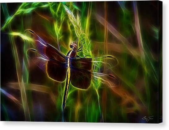 Dazzling Dragonfly Canvas Print by Barry Jones