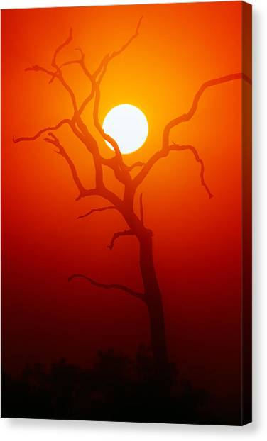 Glowing Canvas Print - Dead Tree Silhouette And Glowing Sun by Johan Swanepoel