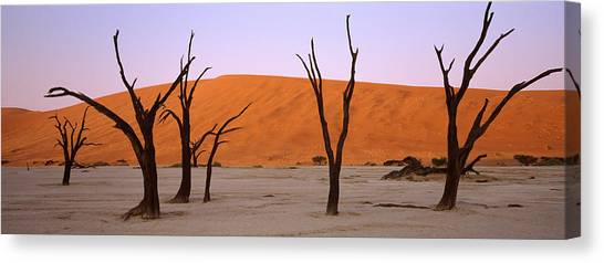 Namib Desert Canvas Print - Dead Trees In A Desert At Sunrise, Dead by Panoramic Images