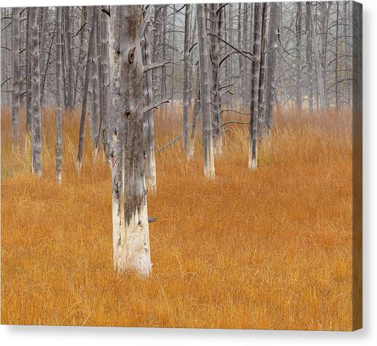 Yellowstone Caldera Canvas Print - Dead Trees In The Midway Geyser Basin by Maresa Pryor