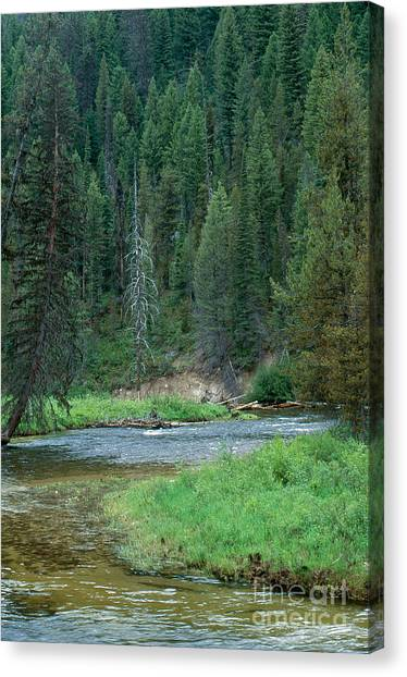 Boise National Forest Canvas Print - Deadwood River by William H. Mullins