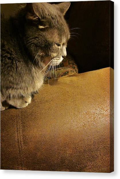 Dear Lucy Canvas Print by Guy Ricketts