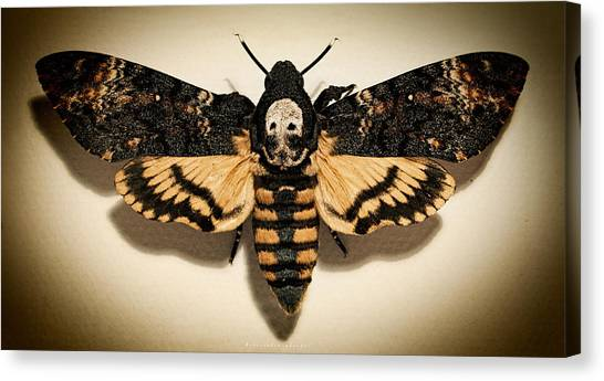 Silence Of The Lambs Canvas Print - Deaths Head Hawk Moth Lomo by Weston Westmoreland