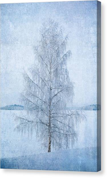 December Birch Canvas Print