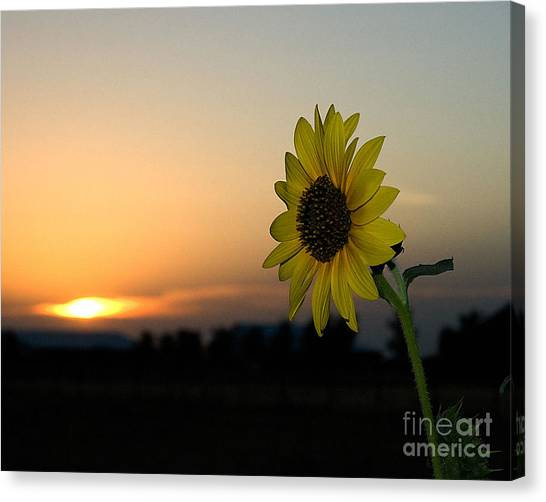 Canvas Print featuring the photograph Sunflower And Sunset by Mae Wertz