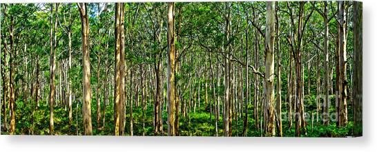 Oz Canvas Print - Deep Forest by Az Jackson