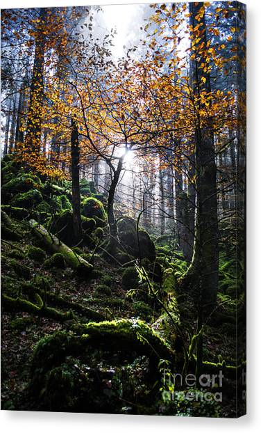Foggy Forests Canvas Print - Deep Forest by Yuri Santin