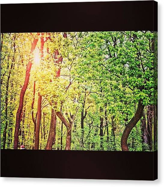 Grove Canvas Print - Deep In The Forest by Artondra Hall