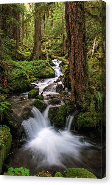 Mossy Forest Canvas Print - Deep In The Forest by Pamela Winders