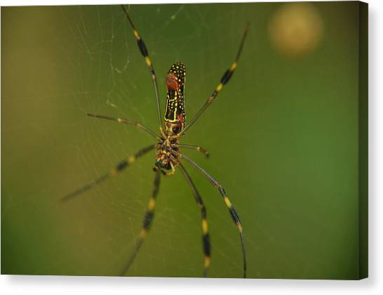 Deep In The Jungle Canvas Print