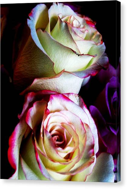 Deep Pink Canvas Print by Will Boutin Photos