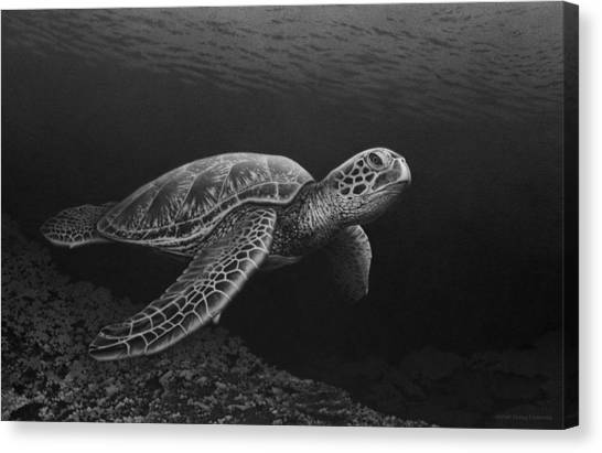 Snorkling Canvas Print - Deep Sea Drifter by Stirring Images