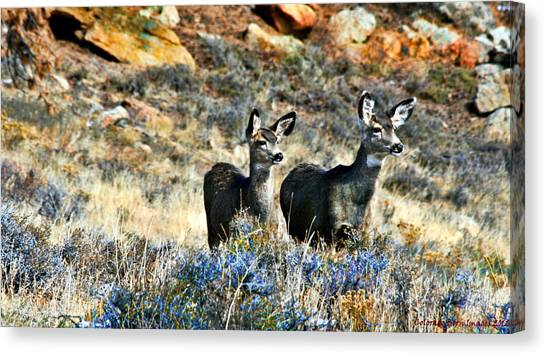 Deer Alert Canvas Print by Rebecca Adams