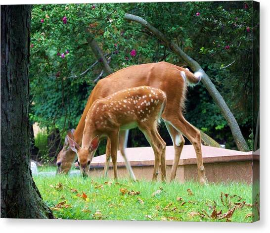 Deer And Fawn Canvas Print by Adam L