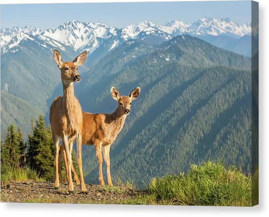 Deer And Mountains Canvas Print by Kencanning