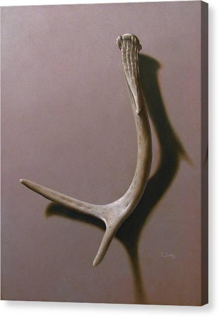 Deer Antler Canvas Print by Timothy Jones