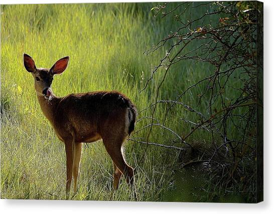 Deer At Home Away From Home Canvas Print