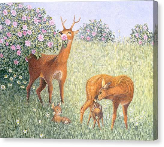 Faun Canvas Print - Deer Family Oil On Canvas by Pat Scott