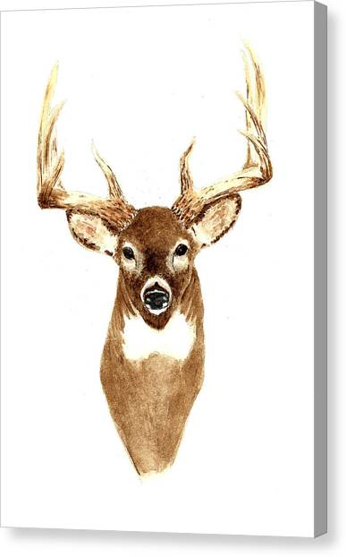 Antlers Canvas Print - Deer - Front View by Michael Vigliotti
