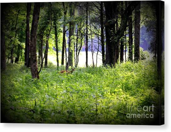 Deer Glade Canvas Print