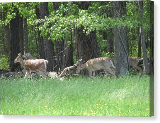 Deer In A Group Canvas Print by Debbie Nester