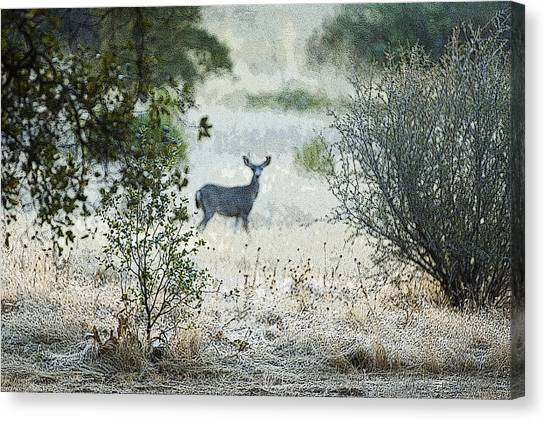 Canvas Print featuring the photograph Deer In A Meadow by Sherri Meyer
