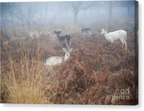 Deer In The Mist Canvas Print by Donald Davis