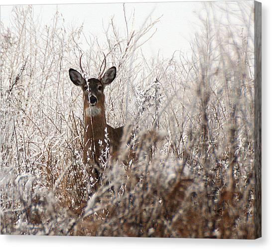 Deer In Winter Canvas Print