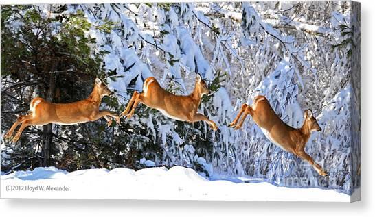 Deer Jump Canvas Print