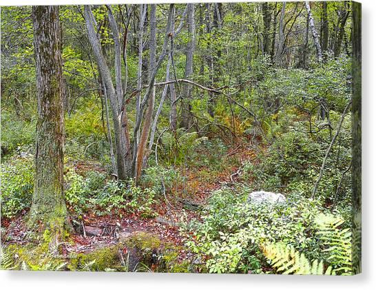 Deer Trail Early Autumn Pocono Mountains Pennsylvania Canvas Print