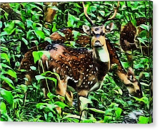 Deer's Green Day Canvas Print