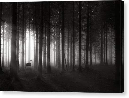Sun Rays Canvas Print - Deer`s Morning by Christoph Hessel