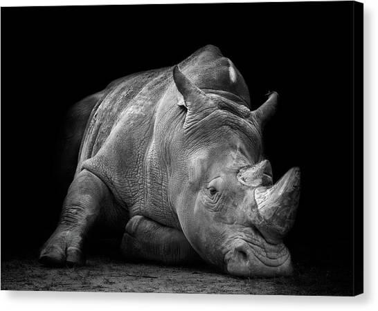 Rhinos Canvas Print - Defeated by Fegari