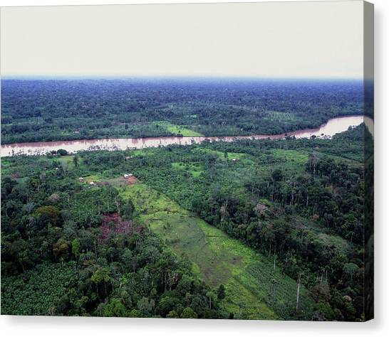 Amazon Rainforest Canvas Print - Deforestation In Rainforest By Ecuadorian Amazon by Dr Morley Read/science Photo Library