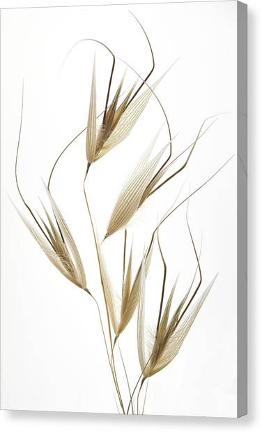 Delicacy Of Nature Canvas Print by Shogun