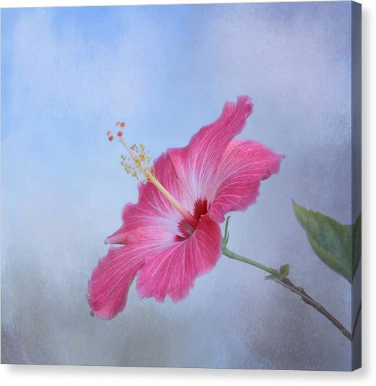 Charming Cottage Canvas Print - Delicate Beauty by Kim Hojnacki