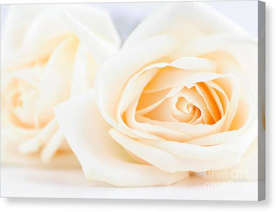 Rose Canvas Print - Delicate Beige Roses by Elena Elisseeva