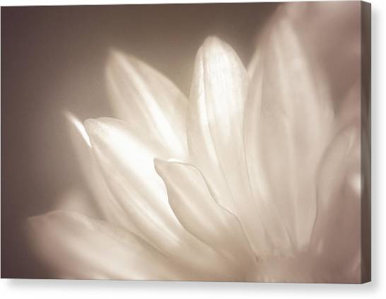 Bloom Canvas Print - Delicate by Scott Norris