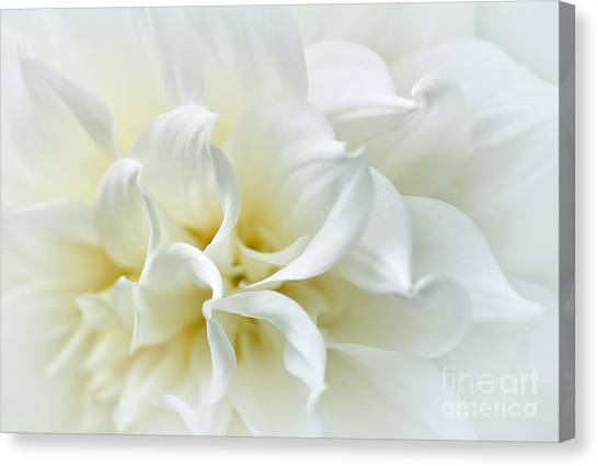 Delicate White Softness Canvas Print
