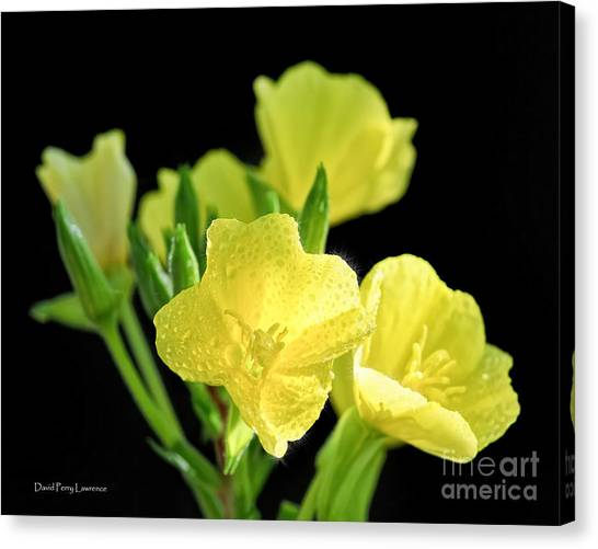 Delicate Yellow Wildflowers In The Sun Canvas Print