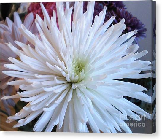 Delicate Yet Strong Canvas Print