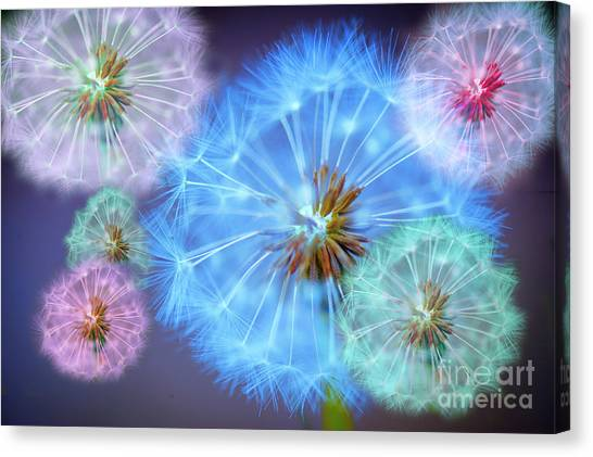 Garden Flowers Canvas Print - Delightful Dandelions by Donald Davis