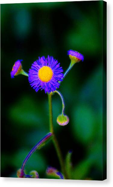 Delightful Flower Canvas Print
