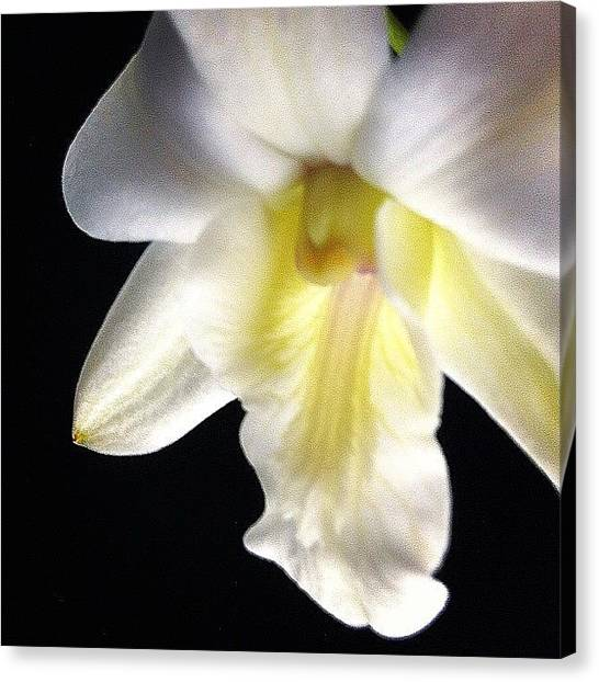 Orchids Canvas Print - Dendrobium #flower #orchid #floral by Art Barker